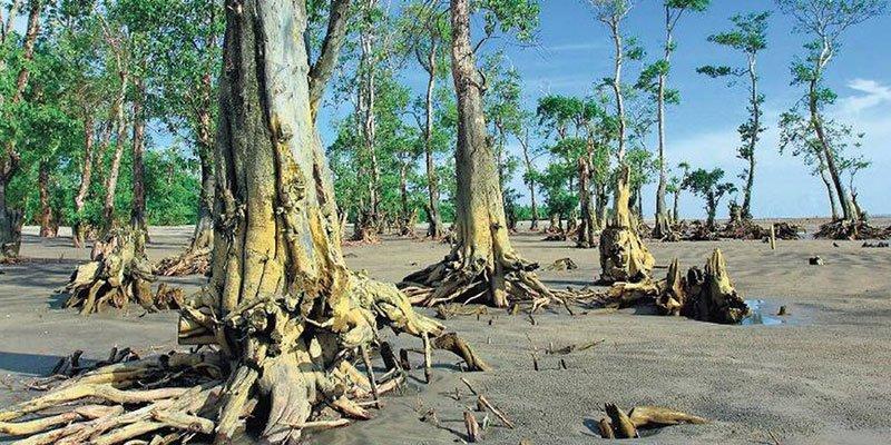 Climate change and Sundarbans